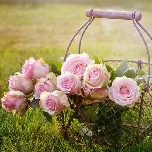 Primavera sem flores? Não... Nunca... Jamais!