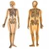 Osteoporose, uma doença silenciosa