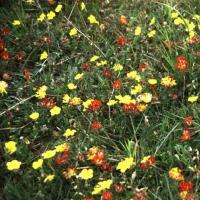 Florais de Bach e Aromaterapia atraem bons fluidos para o lar