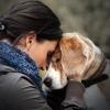 Os benefícios dos cães de apoio emocional