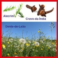 Plantas que podem trazer bem-estar e energia