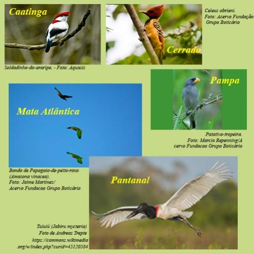 Observação de aves como hobby cresce no Brasil