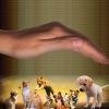 Reiki em animais: podemos aplicar?